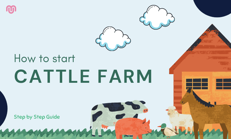 How to start cattle farm business - Step By Step Guide