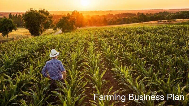Organic Farm Business Plan Example