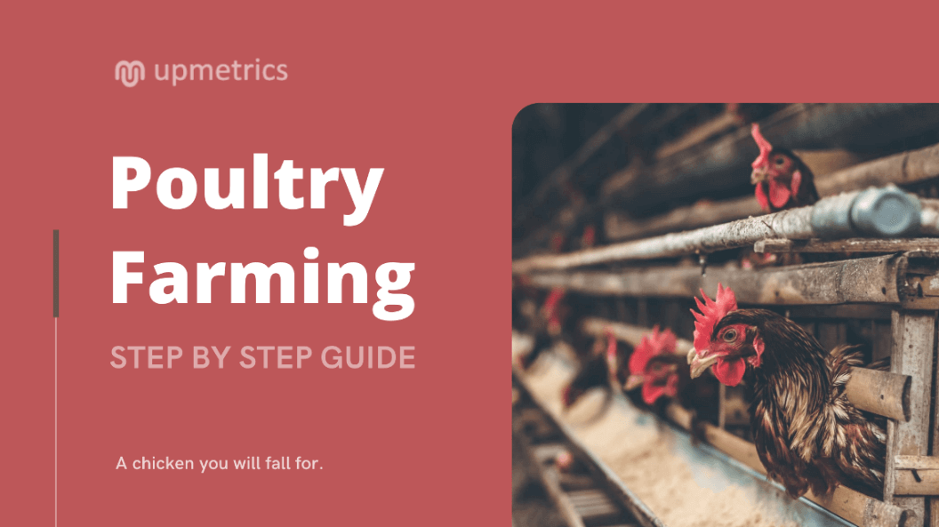 How to start poultry farming business - Step By Step Guide
